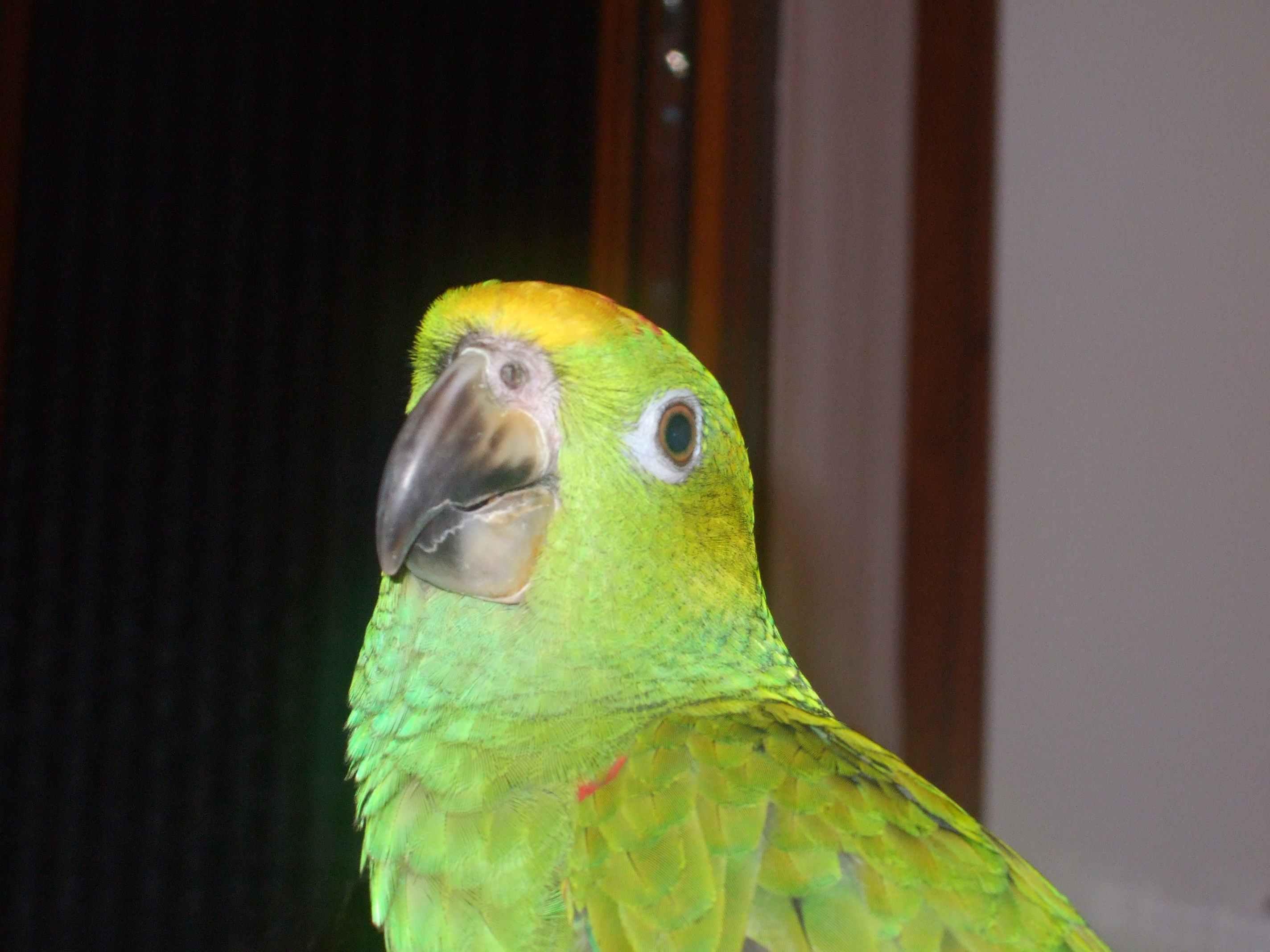 Cerco un ara dove lo posso comprare a buon prezzo www pappagalli ch - Dove acquistare mobili a buon prezzo ...